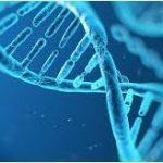若返りに効くサプリ「核酸・酵素」で細胞レベルで活性化