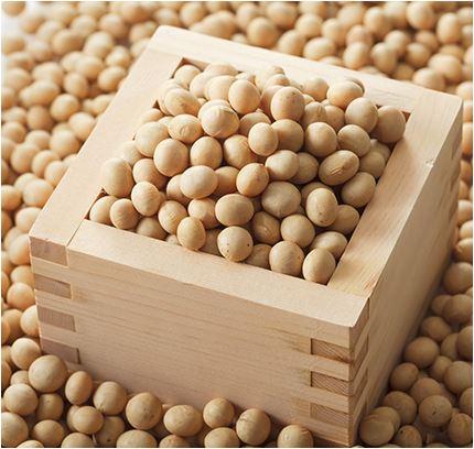 大豆のポリフェノール